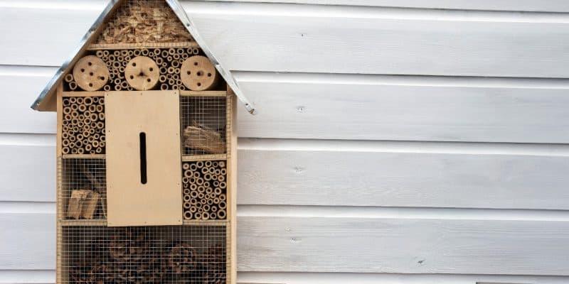 Hotel dla owadów - zrób go sam!