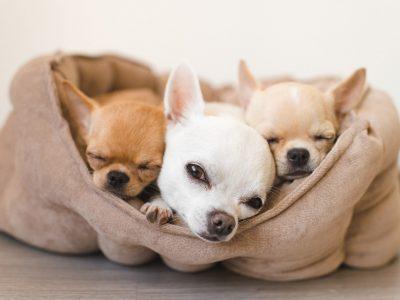 Jak zrobić samodzielnie legowisko dla psa?