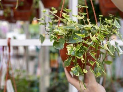 TOP 5 roślin pnących dla Twojego salonu