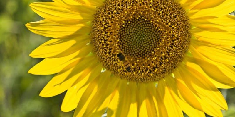 Kwiaty łatwe w uprawie – TOP 10