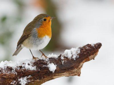 Co możesz robić zimą w ogrodzie?