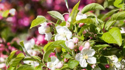 Najpiękniejsze rośliny kwitnące do ogrodu