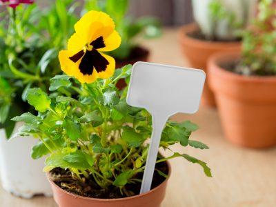 Rośliny na balkon w skrzynkach - jakie zasadzić wiosną?
